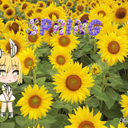 freetoedit primavera