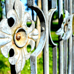 photography details simplethings rose fence