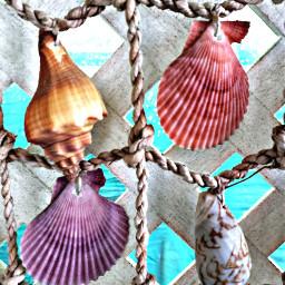 freetoedit colorful seashells myoriginalphoto sunmerfun pccolorfulsummer