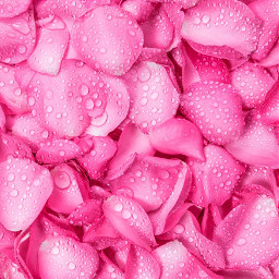 freetoedit petali cuorelucymy lucymy mialu