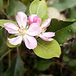 freetoedit flowers freetoeditedited