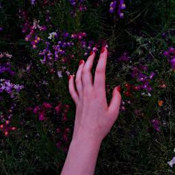 freetoedit floral flowers flowerfield fieldofflowers