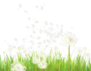 ftestickers grass groundcover dandelions wind freetoedit
