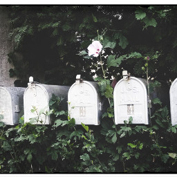 photography photo mailbox postcards designs