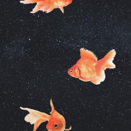 freetoedit wallpaper picsart aesthetic aestheticwallpapers
