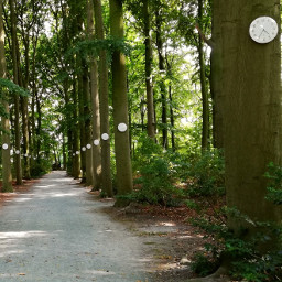 itstime trees nature myphotography clocks