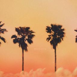 palmtree clouds summervibes summer sunset