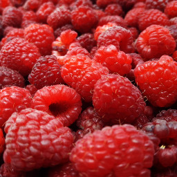 freetoedit raspberries red nature myphotography