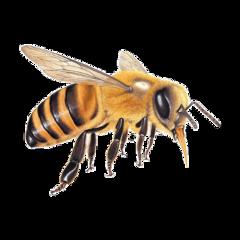 abelha freetoedit