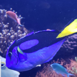 houstontx aquarium dory fish myoriginalphoto pcshadesofblue