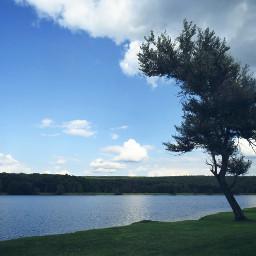 tree lake landscape horizonoverwater summer pcshadesofblue
