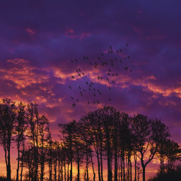 freetoedit sunset trees sky clowds
