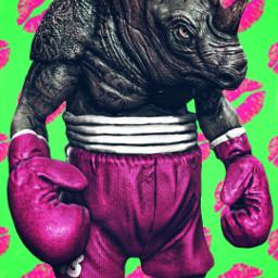 freetoedit weigh-in pinkandgreen rhinoceros kiss