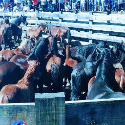 photography horses rapadasbestias galiciahermosa spain