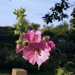 nature flower adjusttool freetoedit