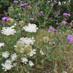 freetoedit wildflowers beautiful