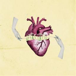 jonasbrothers lyrics collage collageartwork collageoftheday