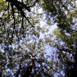 montagne nature foret paysage arbre
