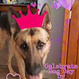 followme likethis commentalways sharethelove dogday freetoedit