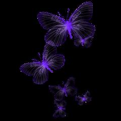 butterfly violet viola farfalla manybutterflyes freetoedit