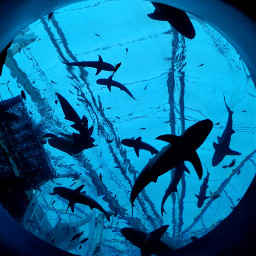 freetoedit sharks fishes
