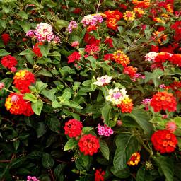 """myfoto flowers natura"""" natura"""