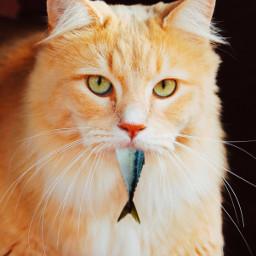 freetoedit nochallenge justforfun kittylove