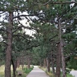 freetoedit forest sidewalk pinetrees myoriginalphoto