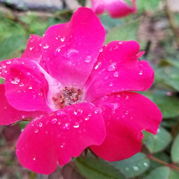 photography nature interesting color pink notfreetoedit