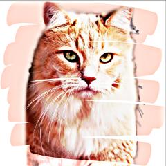 freetoedit irckittylove kittylove