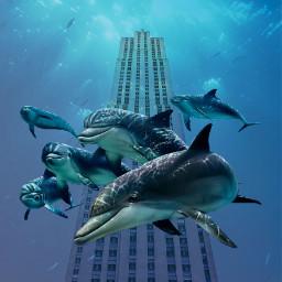 freetoedit underwater dolphins blue water