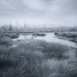 freetoedit swamp water grass grassy