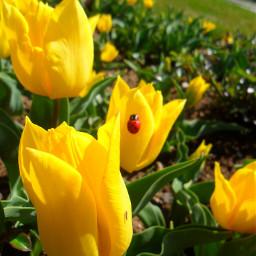 freetoedit iyibayramlar flowers