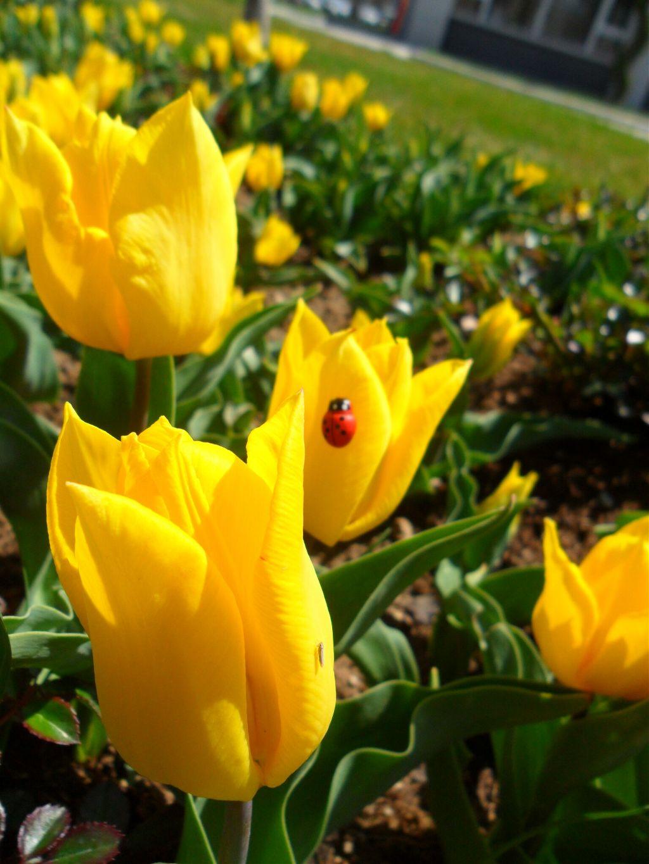 #freetoedit #iyibayramlar #flowers