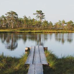 photography nationalpark swamp nature landscape freetoedit