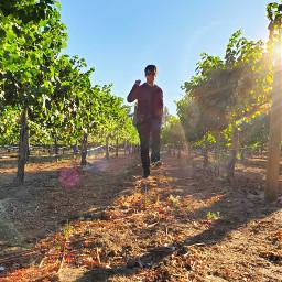winery freetoedit