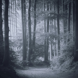 freetoedit forest trees wood arbre