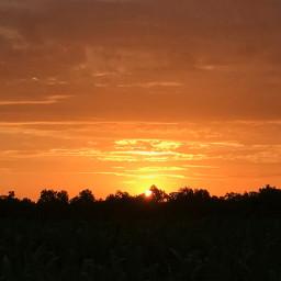 sunset treesilhouette orangesky