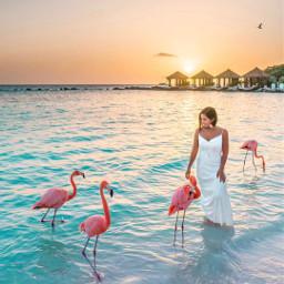 pelican pcwaterislife waterislife