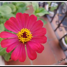 freetoedit lorak💕 zenia flores flovers