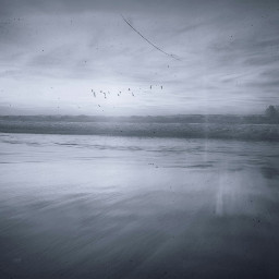 freetoedit water land beach birds