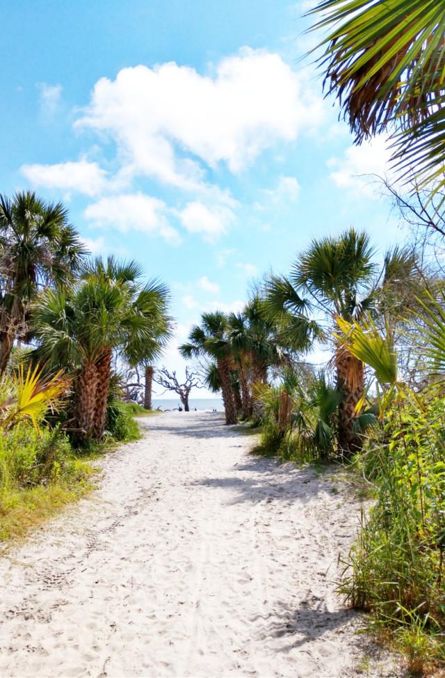 #freetoedit #beach #ocean #atlantic #atlanticocean #jekyllisland #sand #palmtrees #outdoors #naturelover #trailtothebeach #summer #summervibes #travel #vacation #adventure #happines #pcroads