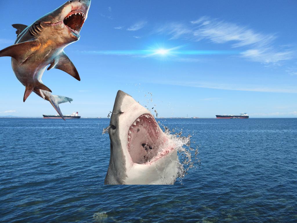 Olha o perigo no tubarão