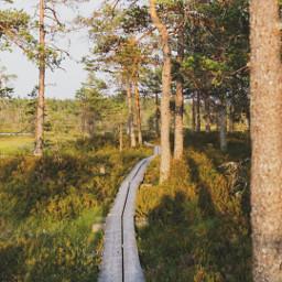 photography nature nationalpark woods freetoedit