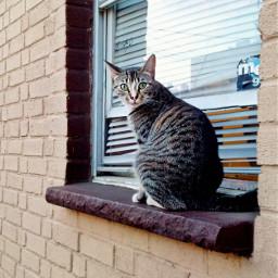 freetoedit cat photo photography feline