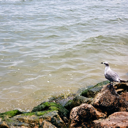 seagull beach emotions lonely water freetoedit pcwaterislife