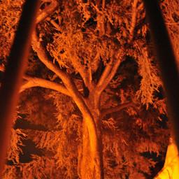 nature treeart