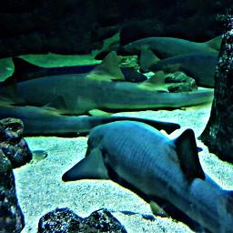 freetoedit water fish shark life pcwaterislife