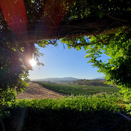 frameit freetoedit winery