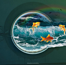 freetoedit water fish rainbow birds ircsubmarine